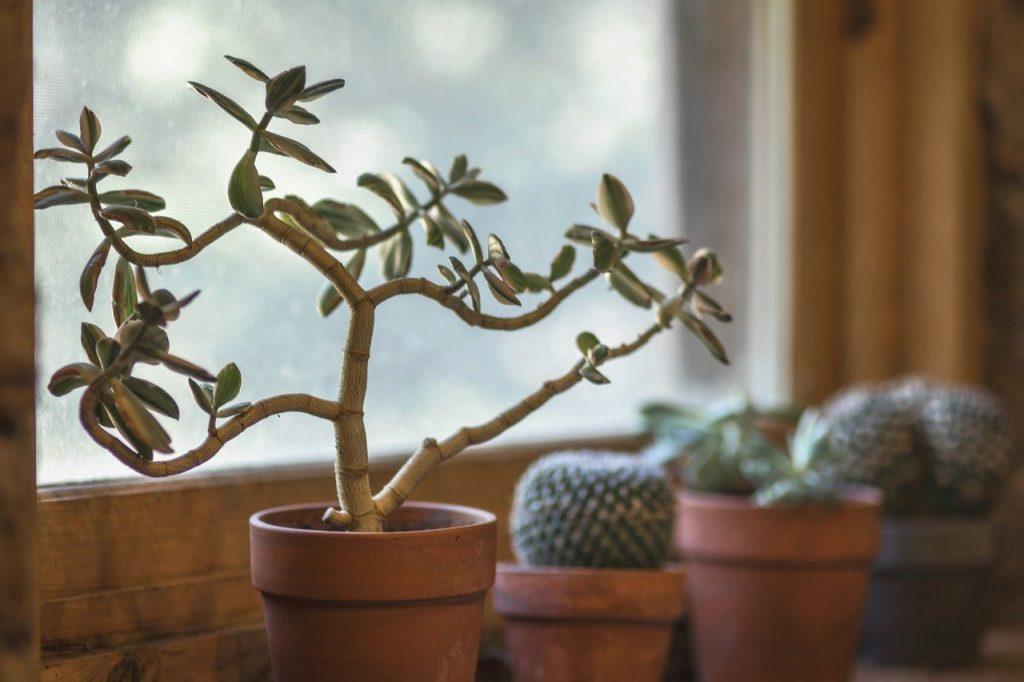kućno bilje