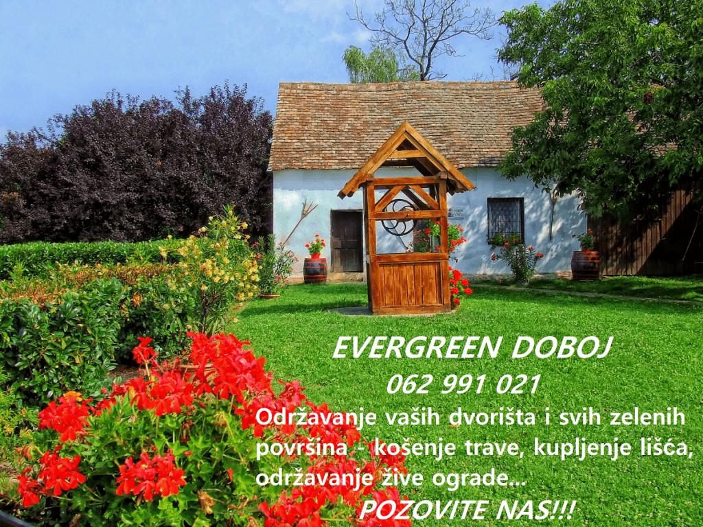 evergreen doboj