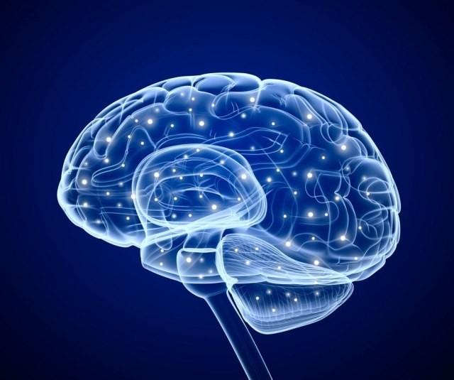 muški mozak i testisi